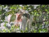 Тополиная пурга...  Песня тронет душу .... Вспомним актера Михай Волонтира.