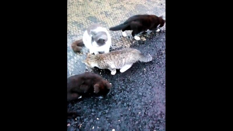 кормлю кошку с котятами
