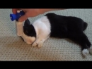Разбудил спящего кролика гудком