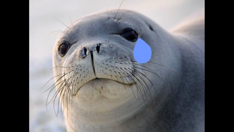 Асенька-следопыт на отчётном концерте лажающих тюленей
