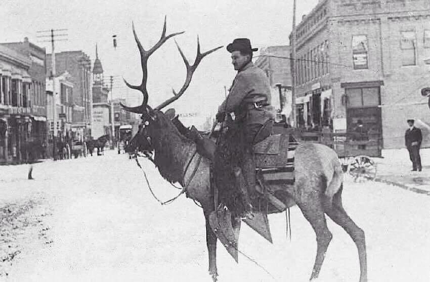 Мужчина едет на олене по городу, Мизула, Монтана, 1900 год.