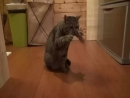 У этого котика лапки, но он хуячит музон. Твои оправдания