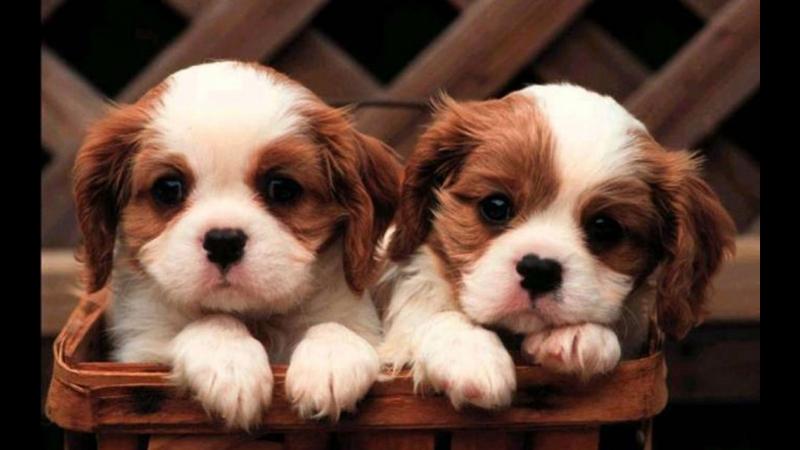 Очень милые и красивые щеночки Позитивное видео Юмор приколы животные собак
