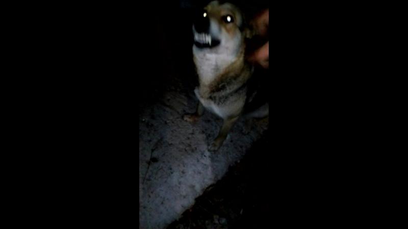 Лая!покажи волка!))