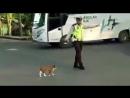 Кот идет через дорогу