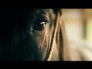 Кони (Horses) - величественная красота, грация и мощь