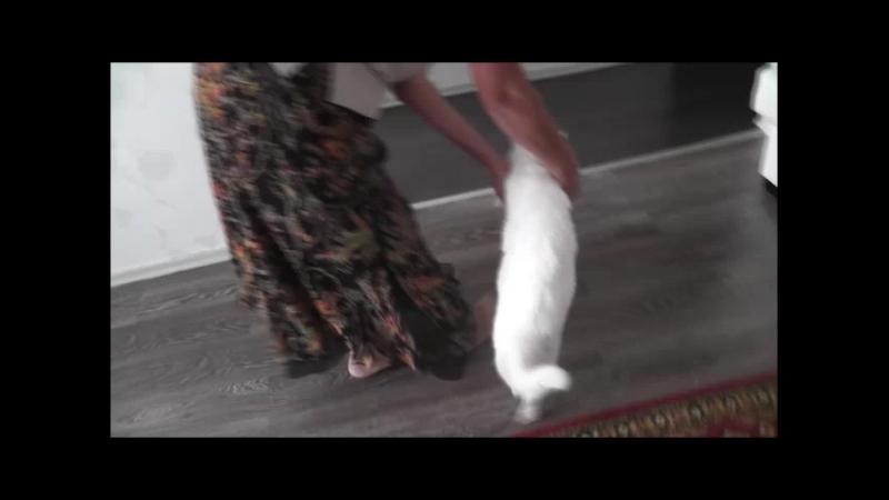 Мама мучает кота