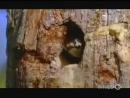 Самые ужасные змеи на нашей планете! документальный фильм про животных