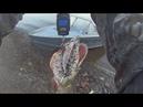 Самая огромная северная щука Тестируем спиннинг Zetrix Exilon Рыбалка на крокодилов
