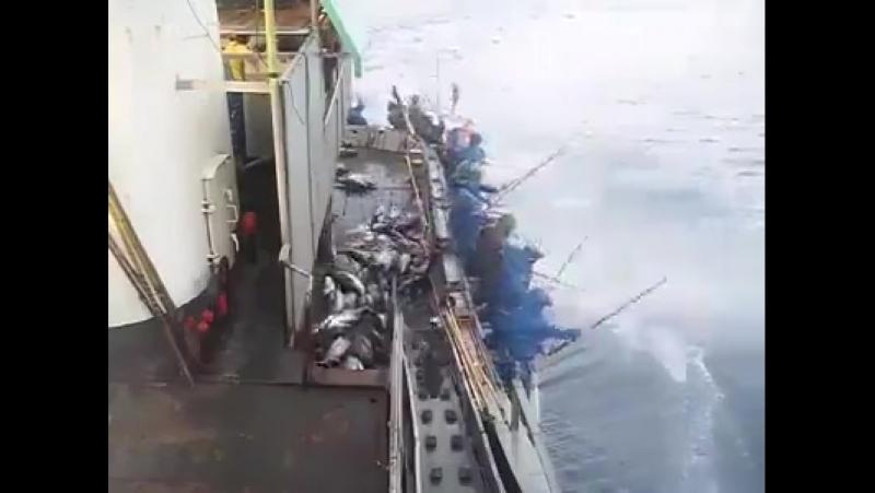 Кому свежей рыбы видео – ONLINE.UA