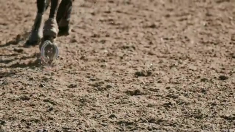 Filma King Horse Riding