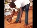 Уникальная способность африканского ловца змей.