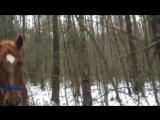 03.12.17 прогулка по лесу