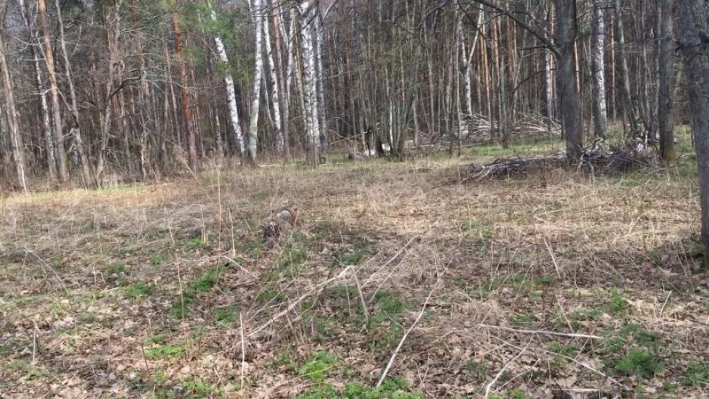 Просека смешанного леса