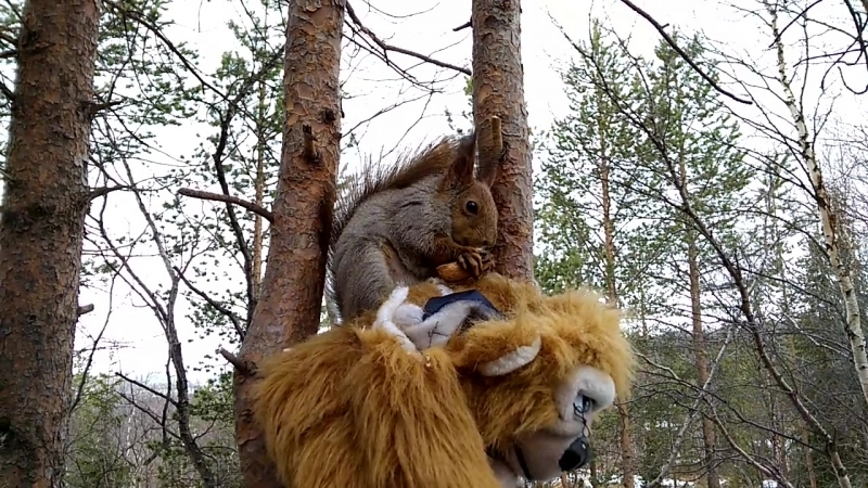 Толстушка и обезьяна.