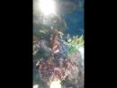 рыбки нэмо