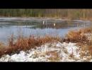 Озеро провального типа Ченцово Со всех сторон болото yklip scscscrp