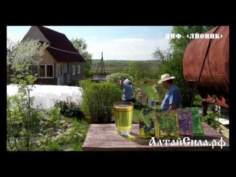 АлтайСила.рф - натуральные витаминизированные сухие напитки Адаптовит