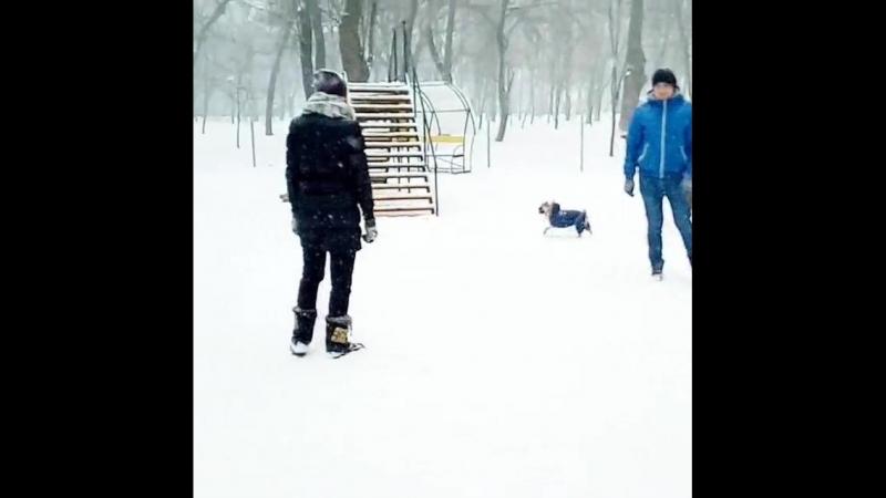зимний собачий кайф