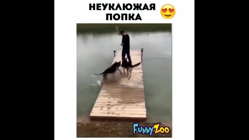 Funny__zoo?utm_source=ig_share_sheetigshid=191qi5pmw04h9.mp4