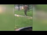 Голый мужчина устроил пробежку по улице, когда муж его возлюбленной вернулся домой