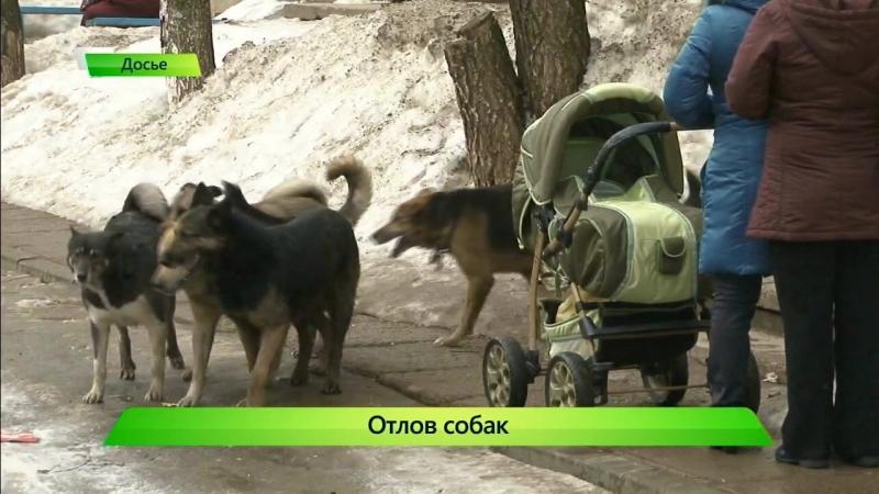 Отлов собак. Проверка КСП. ИК Город 24.05.2018