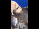 Собака пытается спасти рыб, показывая человеку, что им нужна вода, а человек, вместо того чтобы помочь, всё снимает и снимает ..
