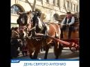 День Святого Антония в Барселоне: парад домашних животных