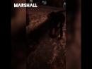 vine by otradnoe(Marshall)