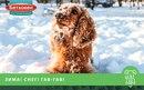 Прогулки с собакой по свежему снегу могут принести не только удовольствие, но и пользу.