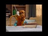 Alf Quote Season 2  Episode  19_Запишите