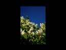 2017-06-06 6ая часть по большаку и Рыженино Столяров Виктор А. CD2 Super Instrumental Music - Collection песни 01, 02. 03.