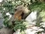INDIA. Dharamsala (McLeod Ganj) Free Tibet дорога на трек ,знакомство с обезьянами