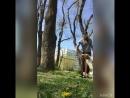 Вольт от дерева