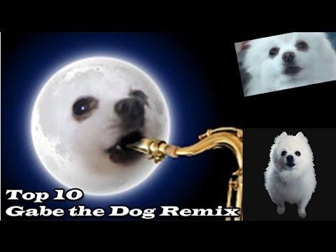 TOP 10 GABE THE DOG REMIX  Топ 10 Гейб собак Ремикс  Ripgabe