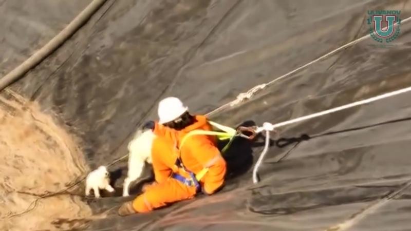 Люди Спасают попавших в беду домашних Животных ...