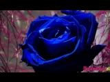 Lake of Tears - To_Blossom_Blue__Karaoke_Version