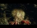 «Эволюция. Битва за жизнь Форма тела» Познавательный, природа, животные, 2008