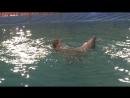 Кто сказал,что Дельфин и Русалка не пара