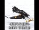 Золотая Черепаха Добыча на двоих Константин Шатенев