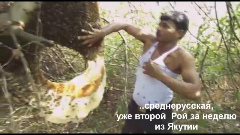 Поимка роёв пчёл