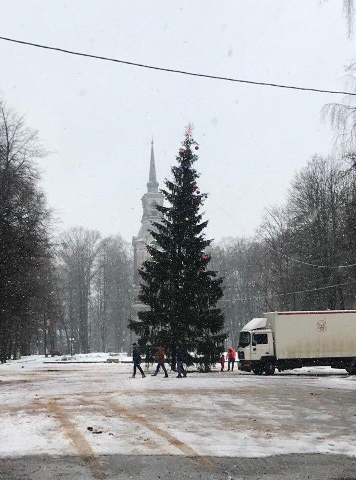 В Осташкове падает елка