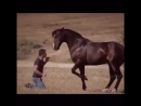 Конь танцует с хозяином