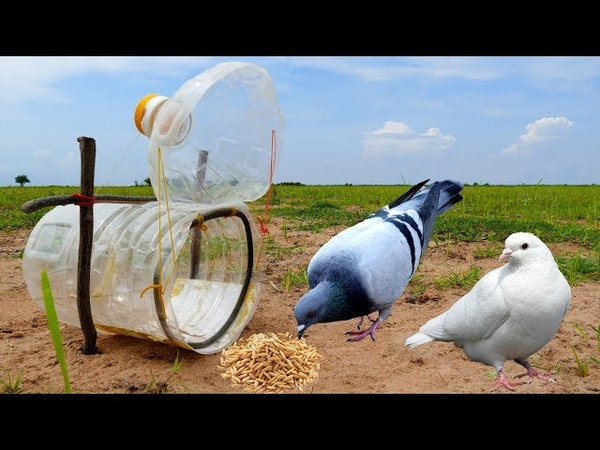 Learning to make Big water bottle bird trap DIY