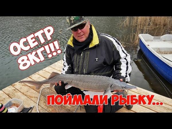 Рыбалка на осетра 26 апреля 2018, д.Чудиново, оз.Кошкино, осетр 8 кг