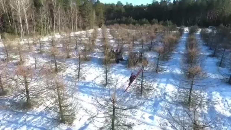 Старобинский лесхоз -сбор шишек