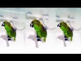 Беловежская пуща, крокодилы, бегемоты а-а и зелёный Попугай Микеша- Макеша