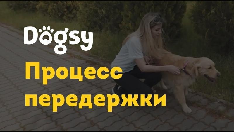 2 Инструкция догситтера Dogsy Процесс передержки