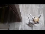Самый милый в мире дверной доводчик #Альтерахолл
