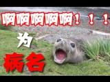 【电音海豹】病名为啊啊啊啊啊啊啊啊!!!!!